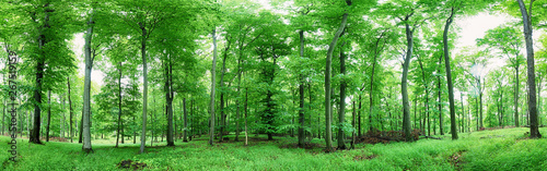 Green forest panorama at rain
