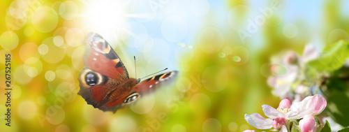 Tuinposter Purper Schmetterling 546