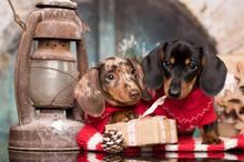 Puppy Christmas Dog Dachshund, New Year's Puppy