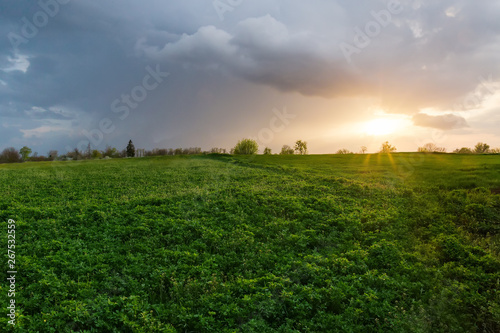 Photo Field of the young alfalfa with other plants at sunset