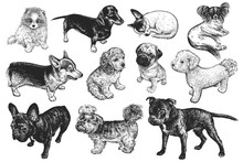 Set Of Cute Puppies. Hand-made Black And White Drawing Of Dogs.