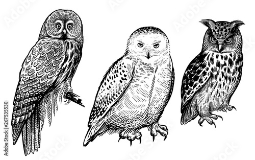 Tuinposter Uilen cartoon Forest birds. Realistic drawing of owls isolated on white background set.