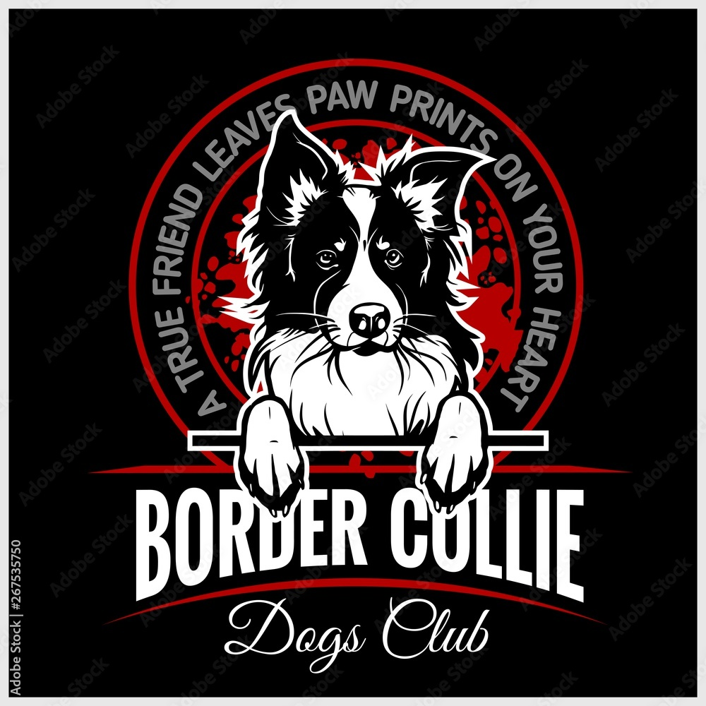 Fototapeta Border Collie - vector illustration for t-shirt, logo and template badges