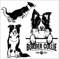 Panel Szklany Pies Border Collie dog - vector set isolated illustration on white background