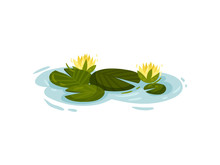 Four Water Lily Leaves With Ye...