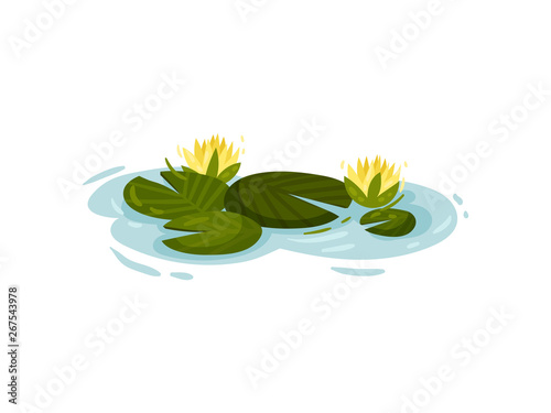 Fototapeta Four water lily leaves with yellow flowers