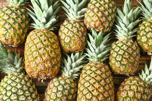 Many Ripe Pineapples As Backgr...