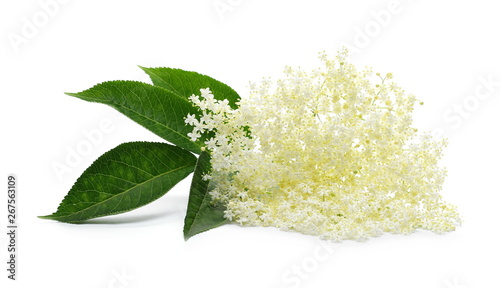 Blossoming elder, elderberry with flowers and leaves isolated on white background #267563109