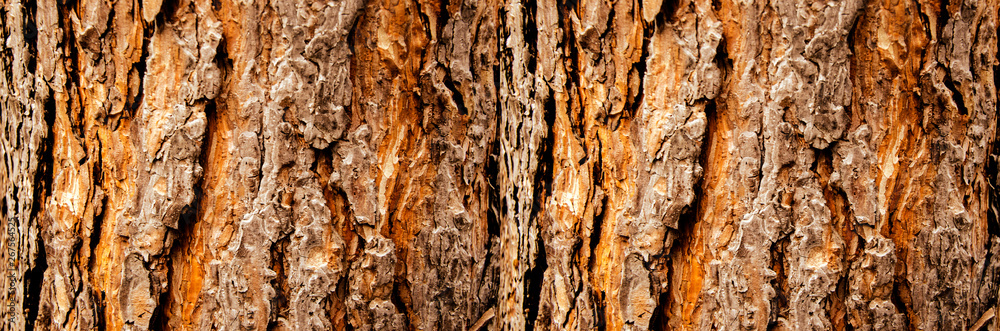 Fototapety, obrazy: Tree bark close-up, horizontal layout