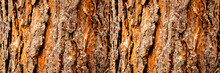 Tree Bark Close-up, Horizontal Layout