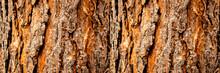 Tree Bark Close-up, Horizontal Layout
