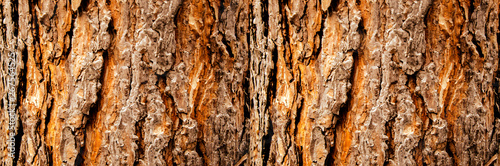 Tree bark close-up, horizontal layout Wallpaper Mural