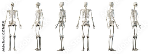 Tela 3d rendered medically accurate illustration of mans skeleton