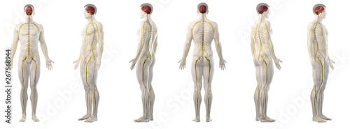 Photo 3d rendered medically accurate illustration of mans nervous system