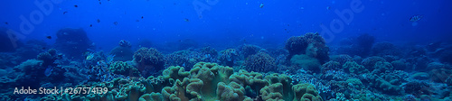 Cadres-photo bureau Recifs coralliens marine ecosystem underwater view / blue ocean wild nature in the sea, abstract background