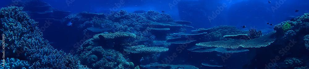 Fototapeta underwater scene / coral reef, world ocean wildlife landscape