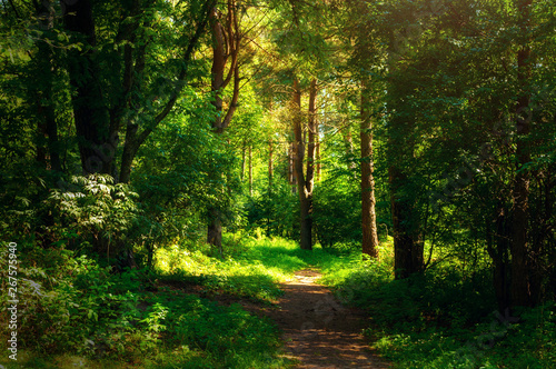 Poster Printemps Forest landscape in sunny weather - forest trees and narrow path lit by sunset light