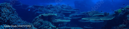 Photo Stands Coral reefs underwater scene / coral reef, world ocean wildlife landscape