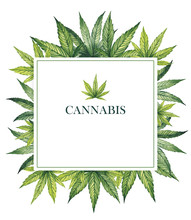 Square Frame With Cannabis Leaves On A White Background. Watercolor Illustration.