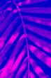 Leinwandbild Motiv Tropical leaf duotone effect. Vertical