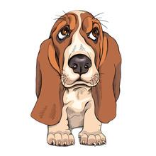 Portrait Of A Puppy Basset Hou...
