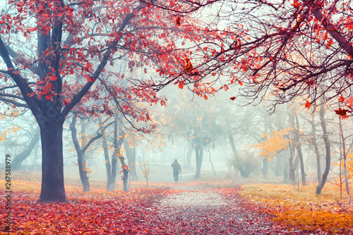 Garden Poster Brown Autumn mist in park. Trees with orange and red foliage