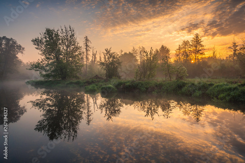 Poster Gris Sunrise over the Jeziorka River and the forest resembling the jungle near Piaseczno, Poland