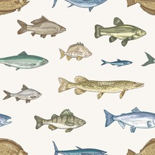 Elegant Seamless Pattern With Different Types Of Fish On Light Background. Backdrop With Underwater Animals Or Aquatic Creatures Living In Sea, Ocean, Lake. Vector Illustration In Vintage Style.
