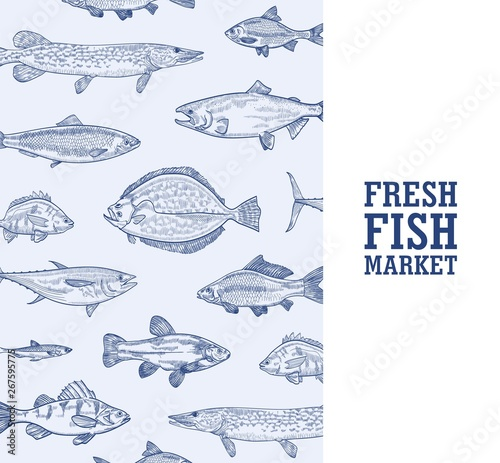 Square monochrome banner template with fish living in sea, ocean or river hand drawn with contour lines on blue background and place for text. Realistic vector illustration for market advertisement.