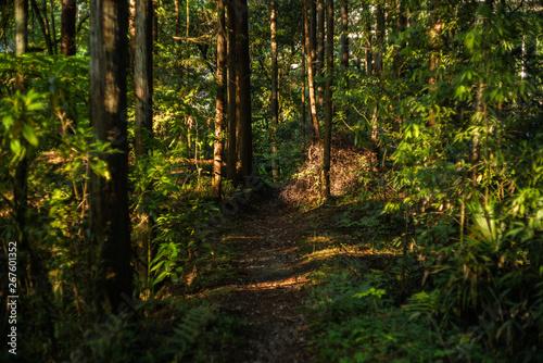 山道と木漏れ日 Canvas Print