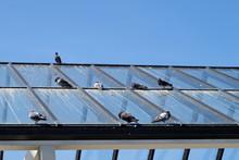 Déjections Pigeons