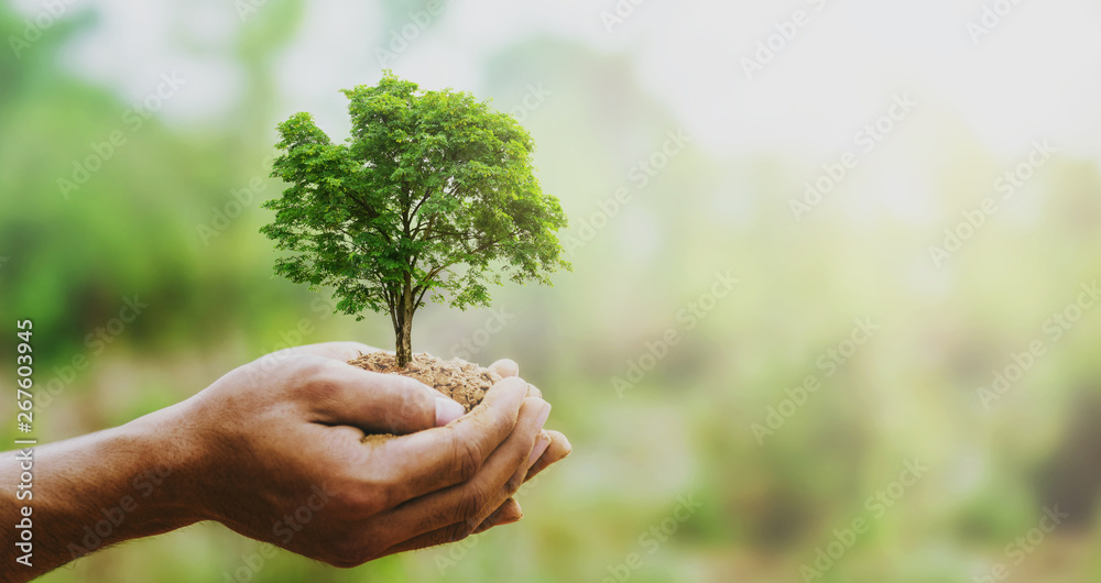 Fototapeta hand holdig big tree growing on green background with sunshine