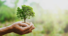 Hand Holdig Big Tree Growing O...