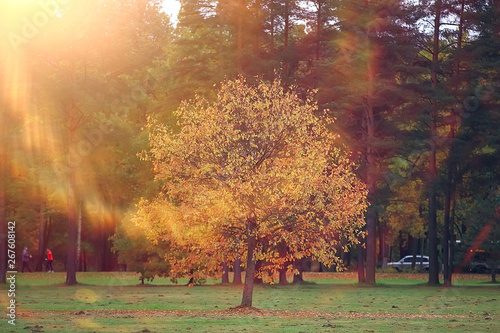 Deurstickers Herfst landscape autumn rays of the sun / beautiful landscape nature of Indian summer, yellow forest and sun