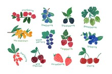 Collection Of Ripe Berries Isolated On White Background - Cranberry, Gooseberry, Blackberry, Blueberry, Barberry. Set Of Natural Decorative Design Elements. Vector Illustration In Modern Flat Style.