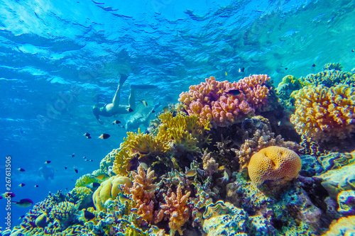 Tuinposter Koraalriffen colorful coral reef and bright fish