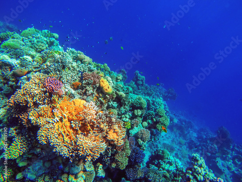colorful coral reef and bright fish