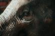 Close-up of an elephant's eye, Thailand