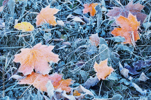 Obraz autumn background with leaves in frost - fototapety do salonu