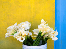 Calla Lily Flower In Bucket Near Yellow Wall