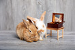 Two rabbits laying down together and listening to music box on table