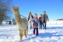 Family Walking With Alpaca On ...