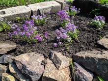 Small Purple Flowers, Home Bed