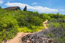Galapagos. Ecuador. A Sandy Pa...