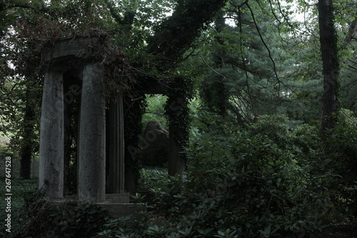 Poster Ruine tree in forest