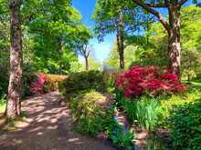 Beautiful Garden Of Richmond Park, Isabella Plantation Area In Summertime With Colorful And Amazing Flowers In London, England