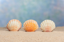 Three Sea Shells With Copy Space