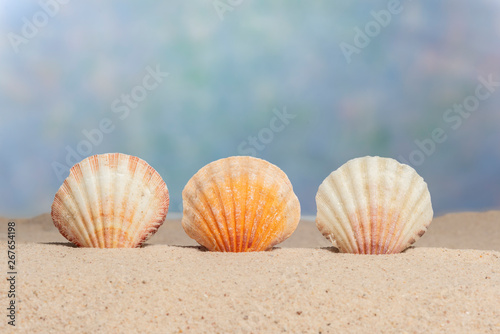 Fototapety, obrazy: Three Sea Shells With Copy Space