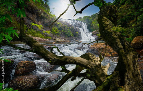 Asian tropical rainforest with river and big tree