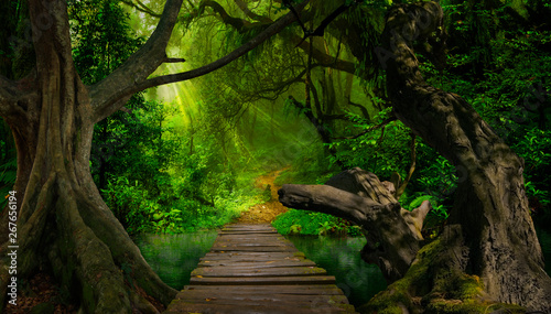 In de dag Bamboo Asian tropical rainforest with river and big tree